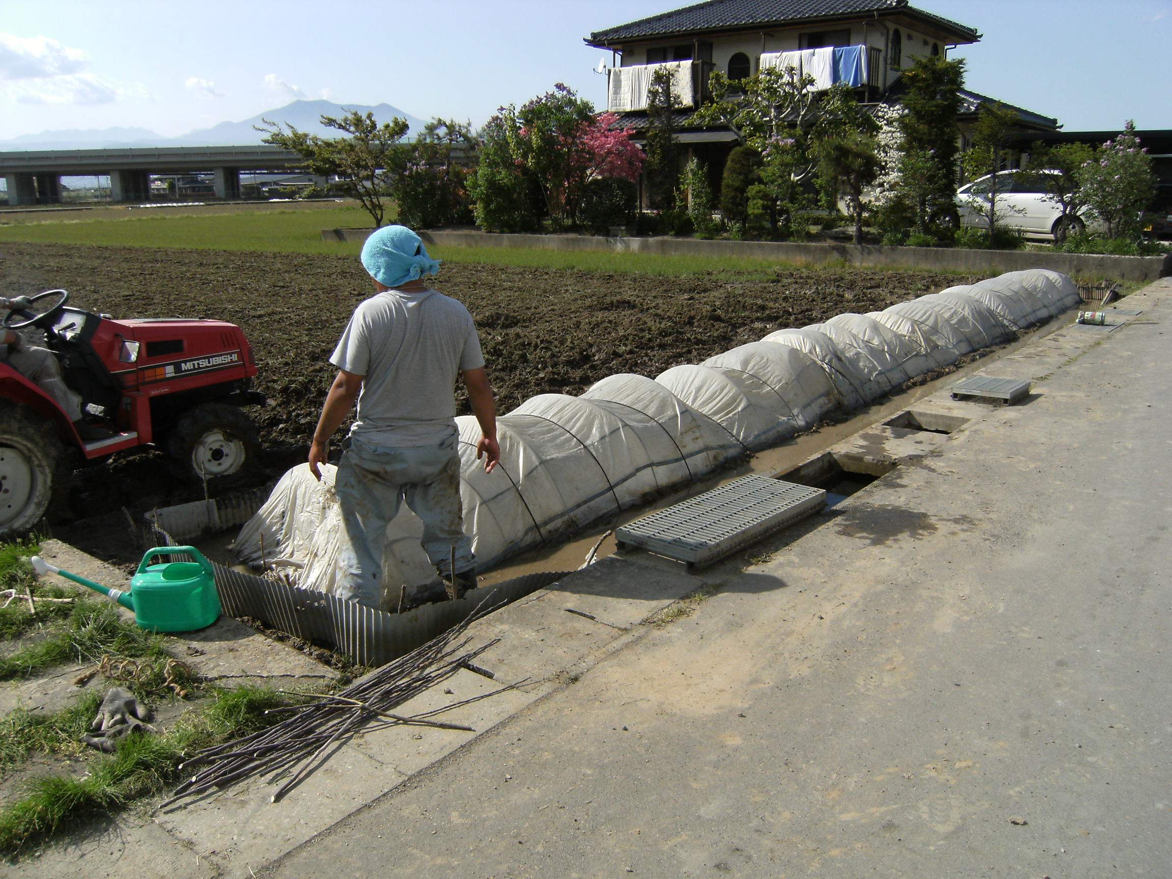 米作り 苗間