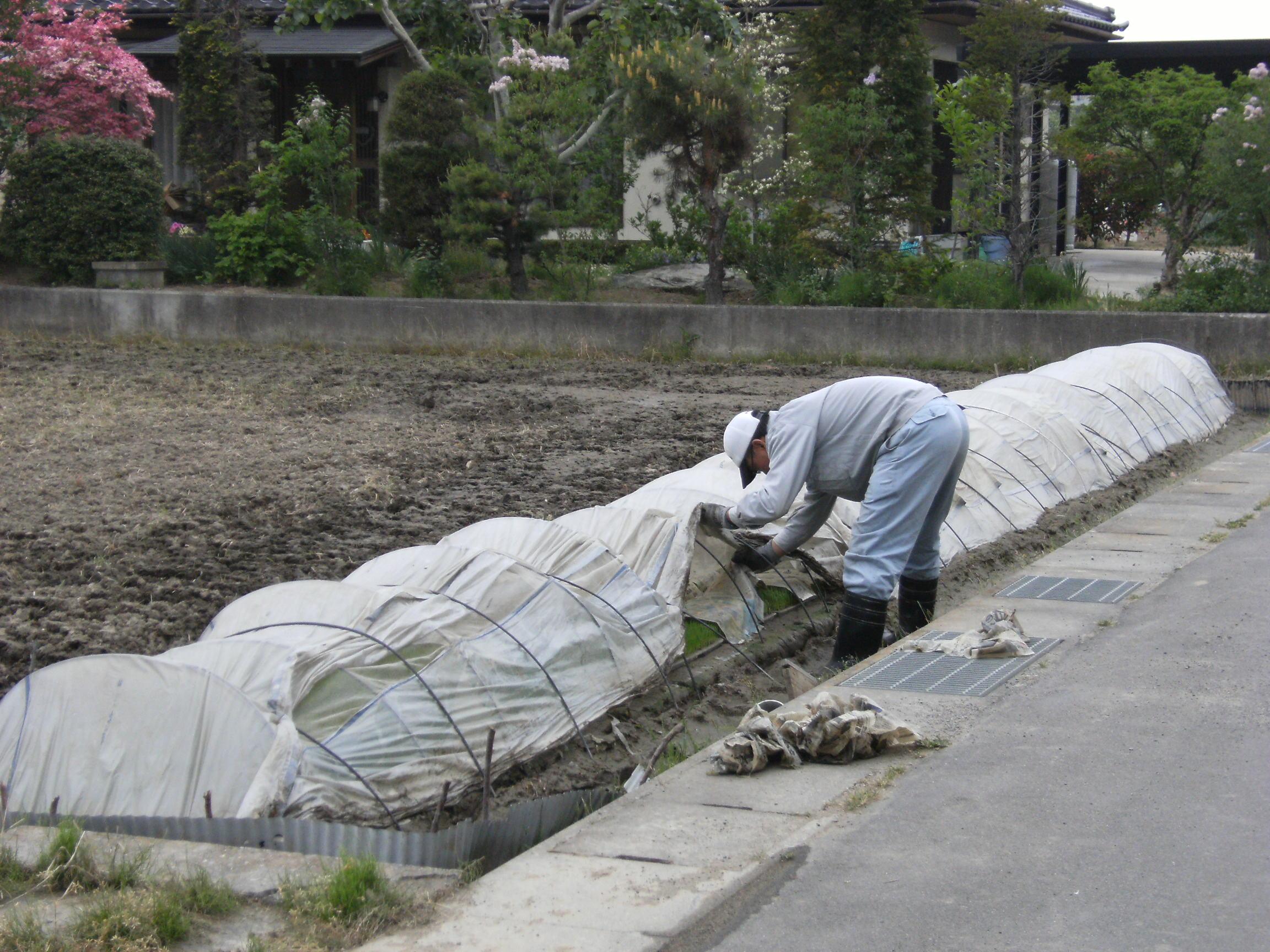 米作り 芽ぶき