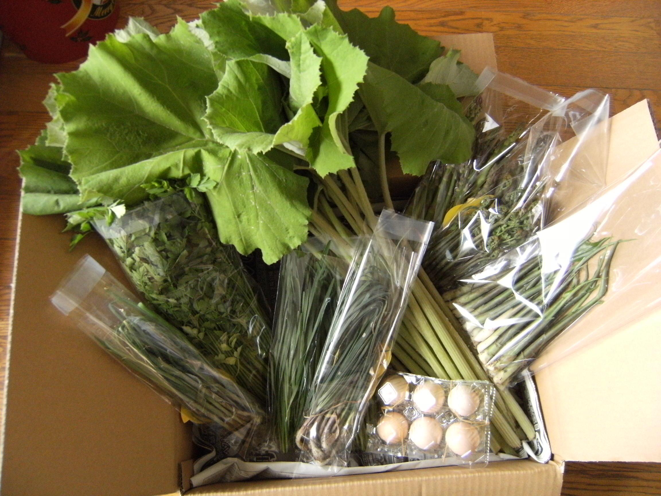季節の野菜&果物