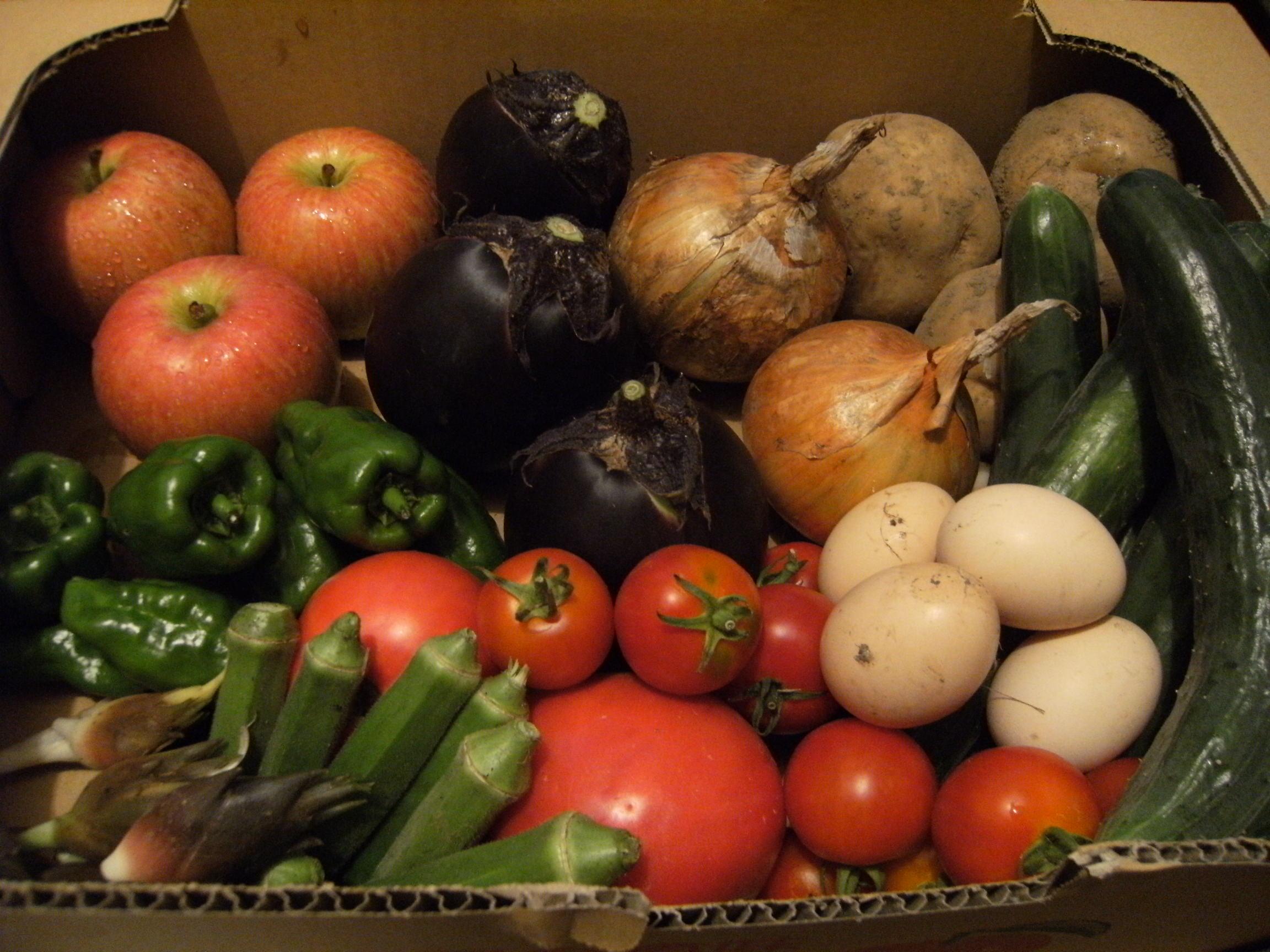 季節の野菜 盛夏
