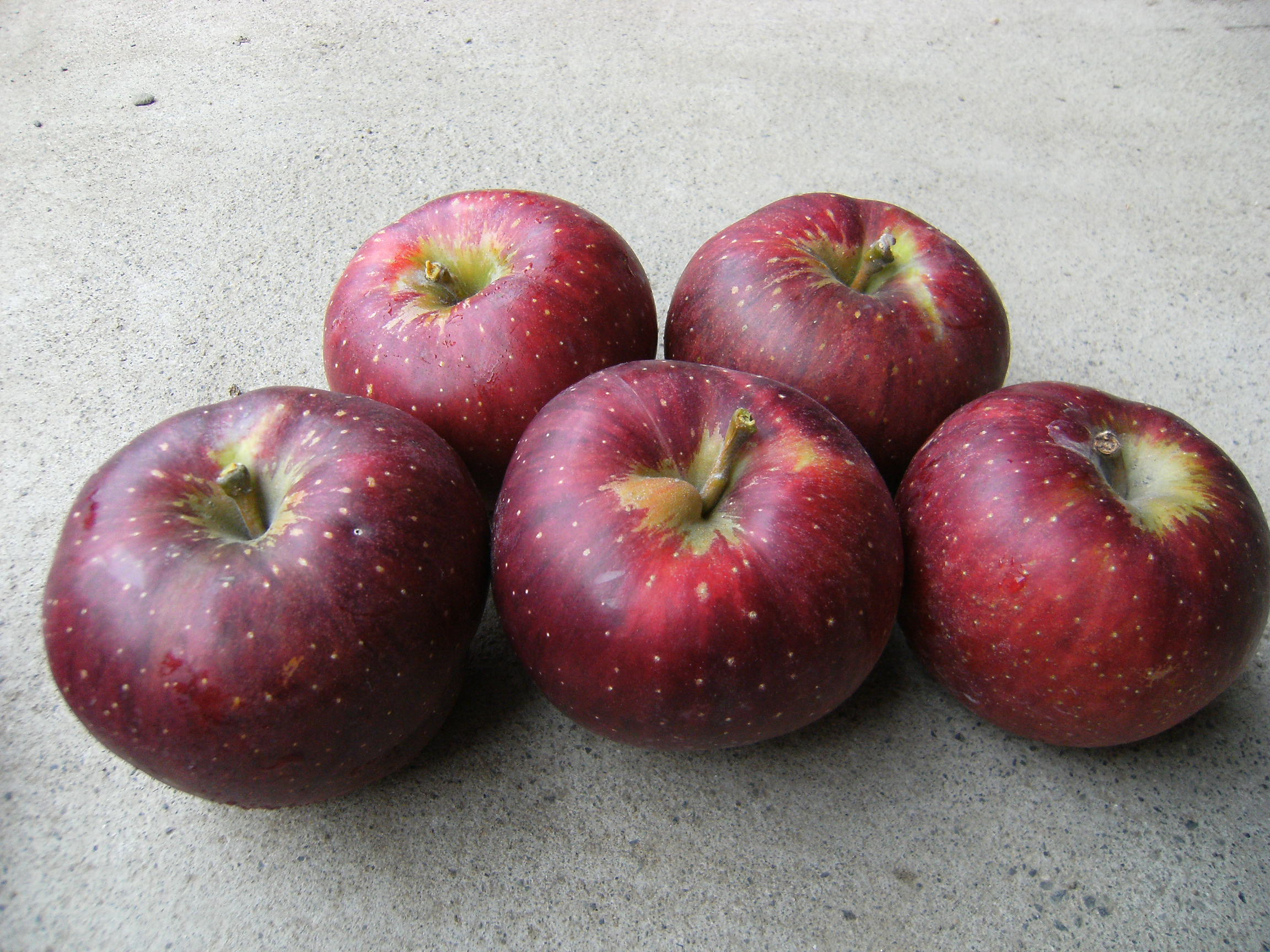 りんご 秋映